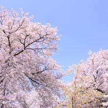 Spring春