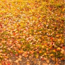Autumn秋