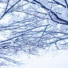Winter冬