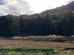 昔は虹マスの養殖に使われていた池